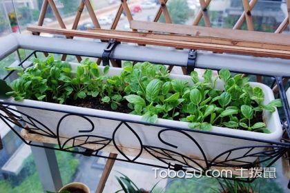 阳台种菜装置有哪些?常用的阳台种菜装置介绍