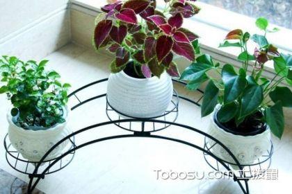 花架什么材质好,家用花架选购技巧