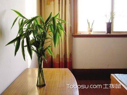 富贵竹放在卧室好吗?卧室中摆放什么植物风水好?