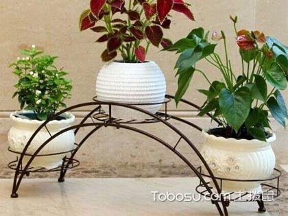 花架什么材质好?选购花架的技巧有哪些?