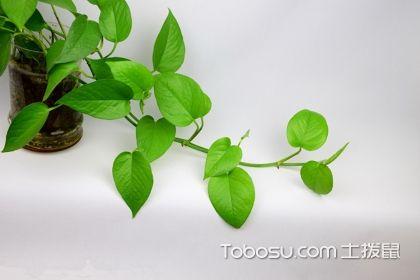 适合卧室摆放的植物有哪些,卧室植物千万不能乱放