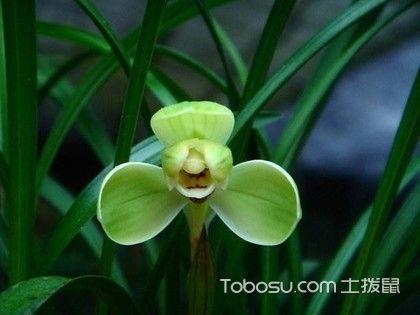 客厅风水植物有哪些?这些植物你都知道吗?