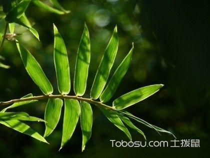 凤尾竹和袖珍椰子的区别,掌握这几点让你轻松分辨