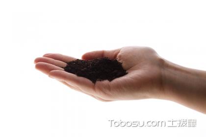 金鱼吊兰土壤,土壤挑选很重要!
