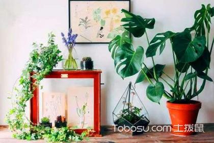 家居綠植風水布局方法,不同房間綠植選擇方法