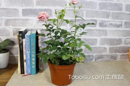 办公室绿植怎么选择?办公室适合养哪些绿色植物