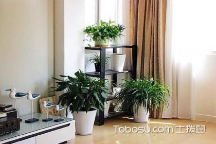 家居绿植风水禁忌,家里面养植物需要注意的风水事项