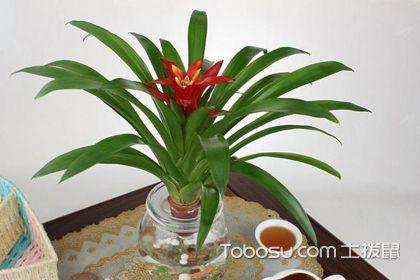 客厅适合放什么植物,放对植物让家庭风水更好