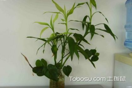 办公室放什么植物好?办公室摆放这些植物好