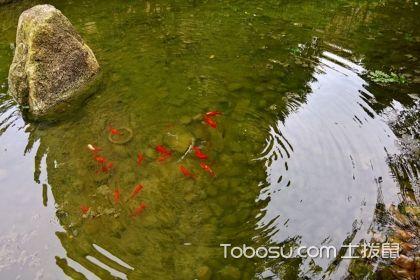 庭院里擺放魚池注意事項有哪些?庭院擺放浴池技巧介紹