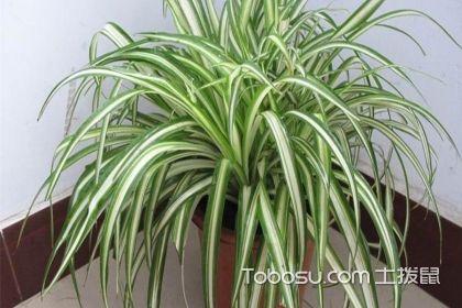 吸甲醛的室内植物有哪些?去除甲醛就在家中摆放这些绿植