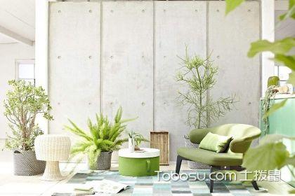 家居植物选购注意事项介绍,让家居空间健康有活力