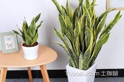 新房適合養什么植物?最適合放在新房里的10種植物