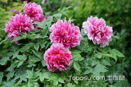 庭院种什么花风水好,庭院植物布置风水注意
