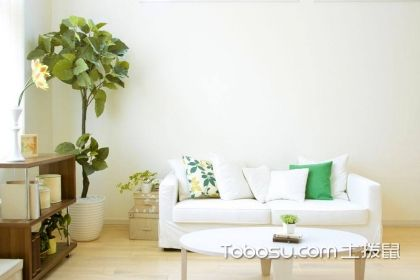 客厅摆放植物隐讳有哪些?你必须要知道的风水知识