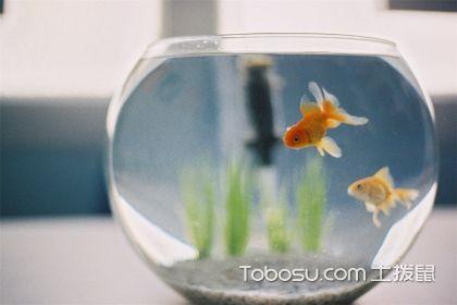 鱼缸摆放风水禁忌,鱼缸摆放风水注意事项