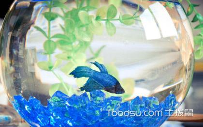 浮法玻璃鱼缸好吗?如何选购鱼缸呢?