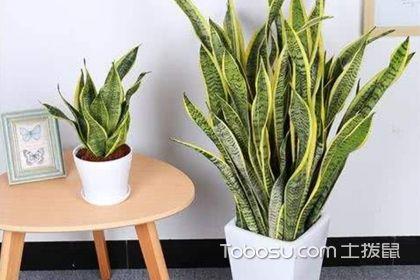 适合冬季养的植物,选择这些植物绝对靠谱!