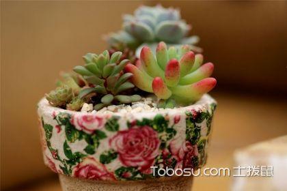 哪些植物适合冬天养,原来它们都是耐寒植物