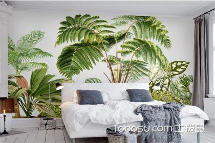 北欧风格和什么植物更搭?这些绿植必不可少