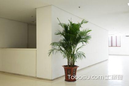 凤尾竹的风水作用是什么?家里养哪些植物比较好?