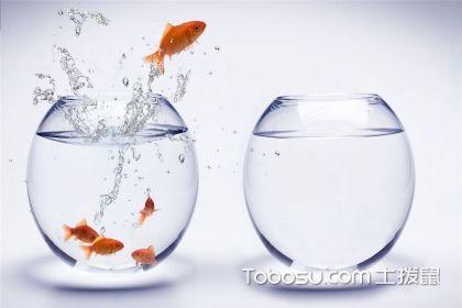 鱼缸摆放在什么位置风水好?鱼缸摆放风水禁忌