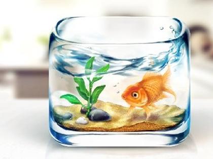 辦公室魚缸放在什么位置風水好?辦公室養魚風水講究知識總結