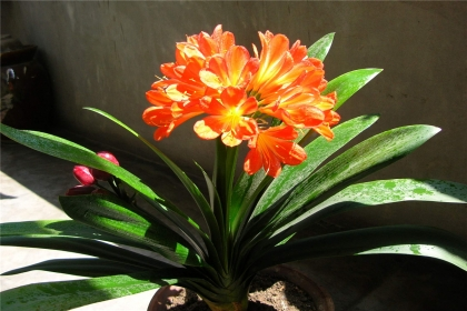 家居風水植物的作用,風水植物該如何選擇