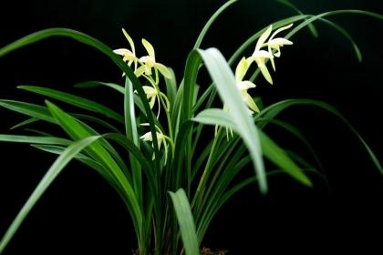 招财的植物有哪些?8种招财植物介绍