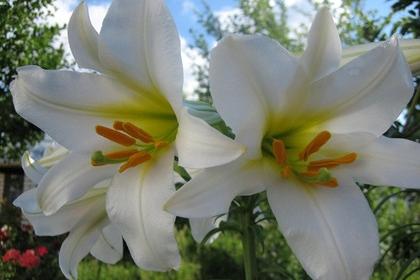 喜陽的室內植物,哪些植物適合室內養殖