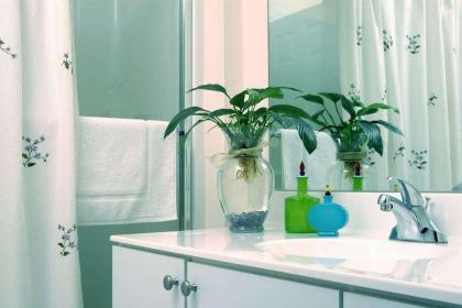 卫生间风水植物有哪些,卫生间风水禁忌介绍