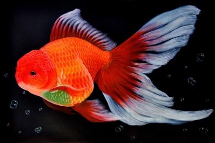 风水鱼有哪些,养风水鱼有什么讲究