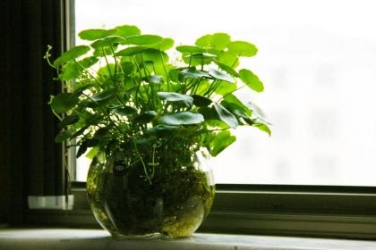 招财的植物有哪些,家居植物摆放方法