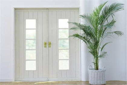 室内植物摆放风水知识,打造舒适安心的居室环境