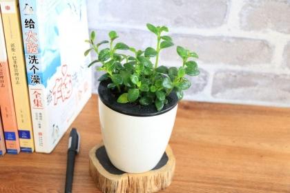 办公室绿植摆放风水,办公室摆什么植物好