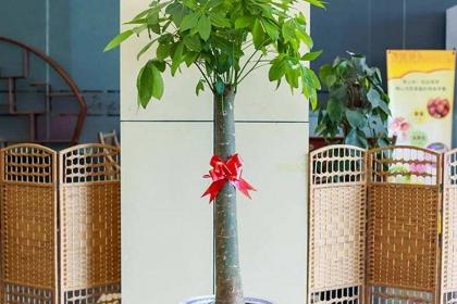 店里放什么植物招財?這五種植物既耐養又招財