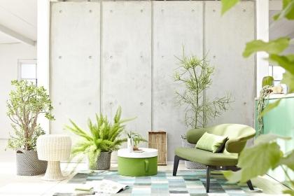 家居植物的布置風水,養什么植物旺風水呢?