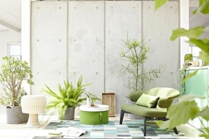 客厅植物别乱放,客厅植物的风水禁忌知识介绍