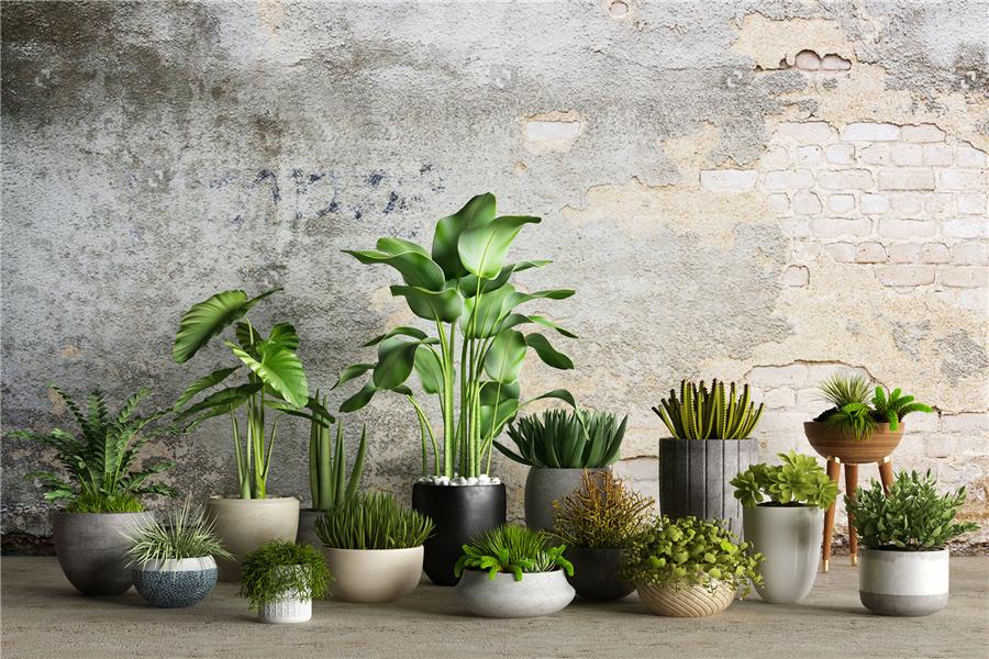 花艺与绿植布置技巧,软装中的花艺与绿植布置