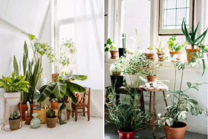 国庆长假来临,家中植物在家怎么浇水?