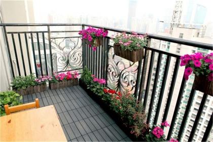家庭阳台布置方法,阳台植物如何布置