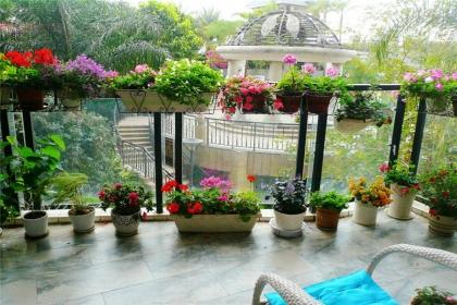 阳台适合种什么植物?阳台适宜的植物推荐