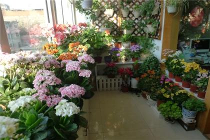阳台变花园,如何把阳台打造成花园