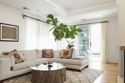 客廳植物怎么擺放好?客廳植物擺放風水