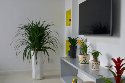 有哪些植物不宜摆放在室内,室内植物摆放注意事项