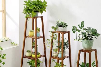 冬季养植物注意事项,关注这几点让植物安稳过冬
