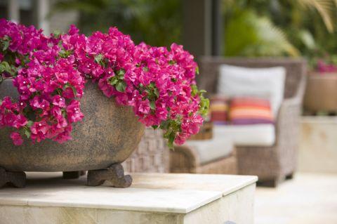 花园现代风格装修图片