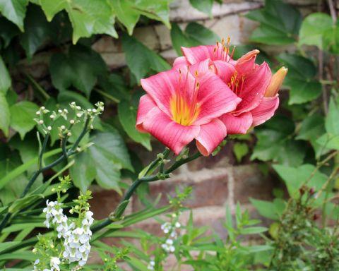 花园红色细节美式风格装潢图片