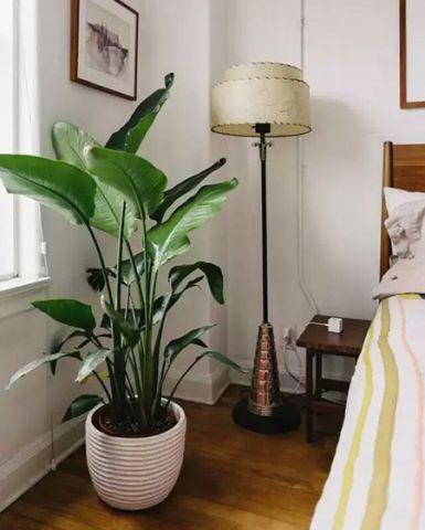 奢华卧室立地灯植物混搭图片