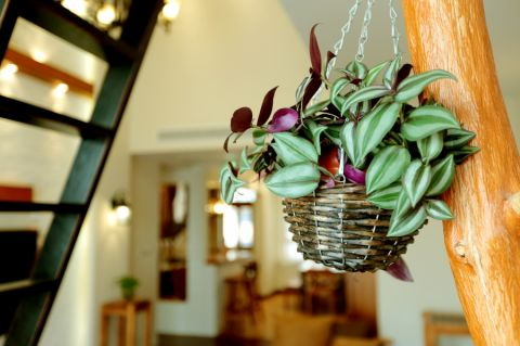 低調優雅客廳植物裝修實景圖